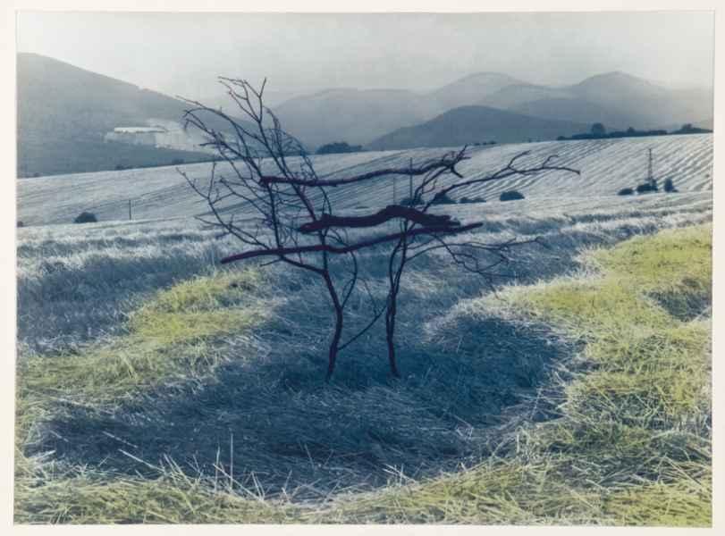 Gally installáció tájban 1. 1994.